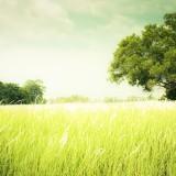 country-landscape-wallpaper-2560x1440