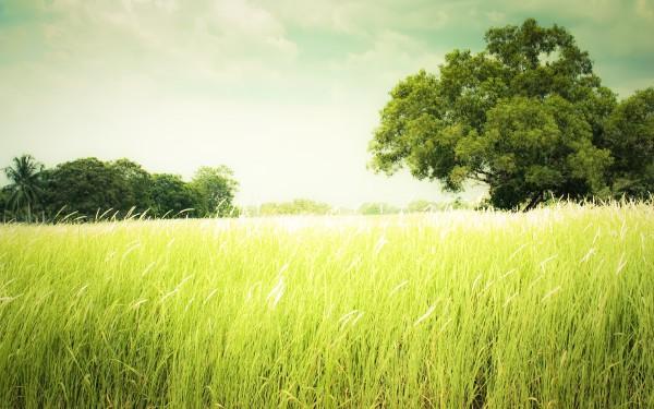 country-landscape-wallpaper-2560x1600.jpg
