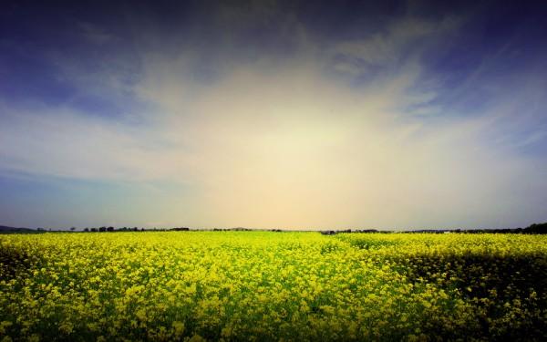 yellow-flower-natarure-photo-wallpaper-2560x1600.jpg